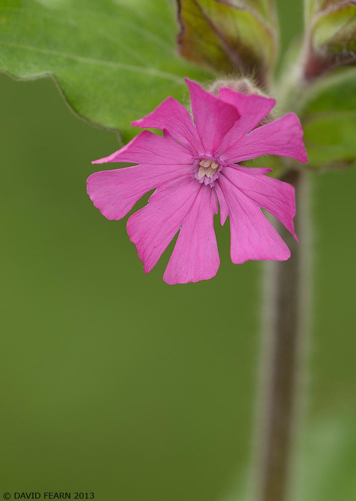 PinkFlowerCropDS1024