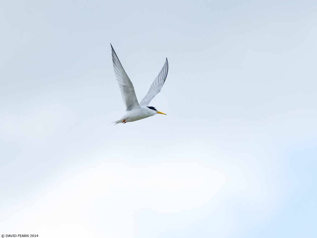 LittleTern1KS1200