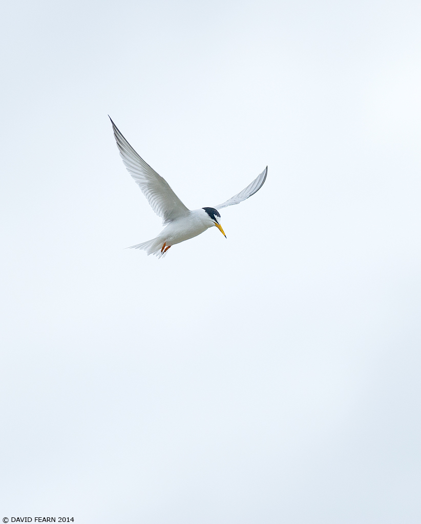 LittleTern2KS1024