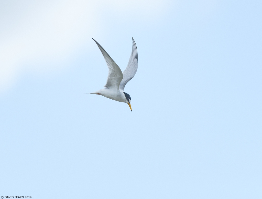 LittleTern3KS1200