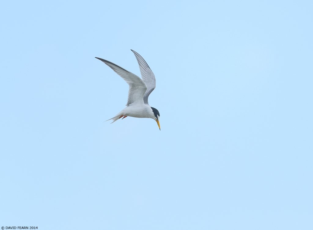 LittleTern4KS1200