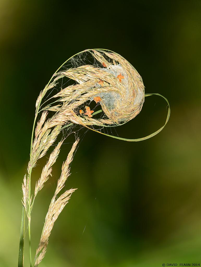 GrassWhirlBF1024
