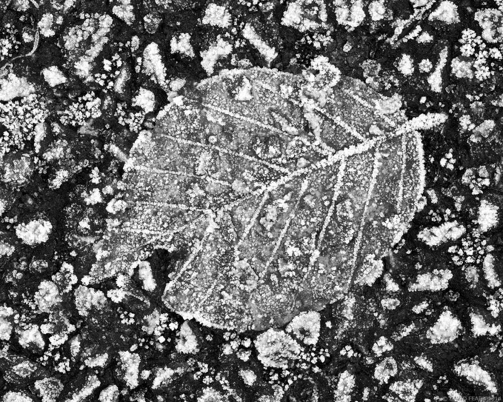 LeafandFrostyGround1200