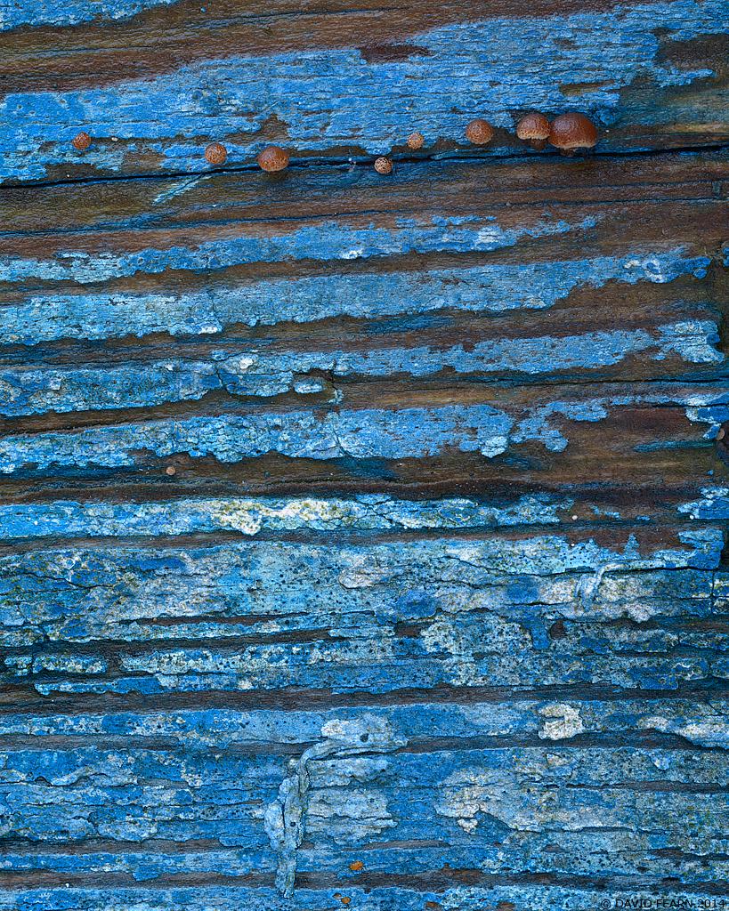 BluePaintandFungus11024