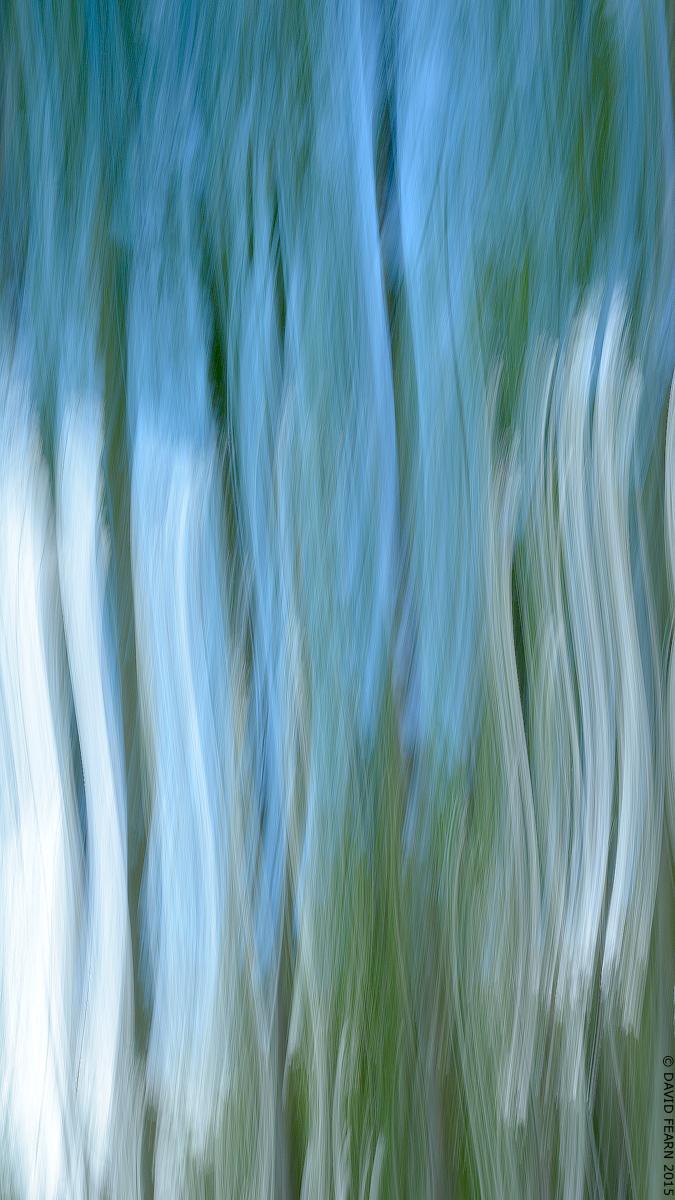 BolehillTrees&BlueSkyICM120016x9