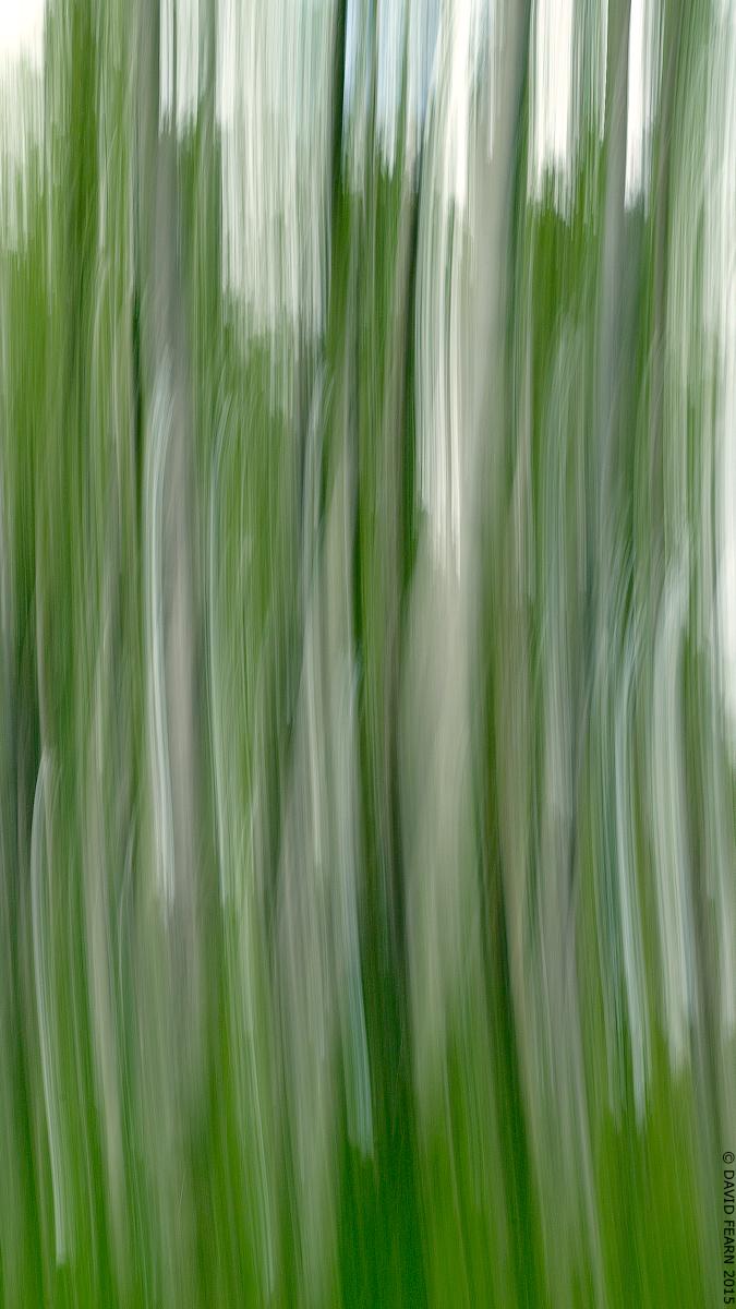 BolehillTrees&SkyICM16x91200