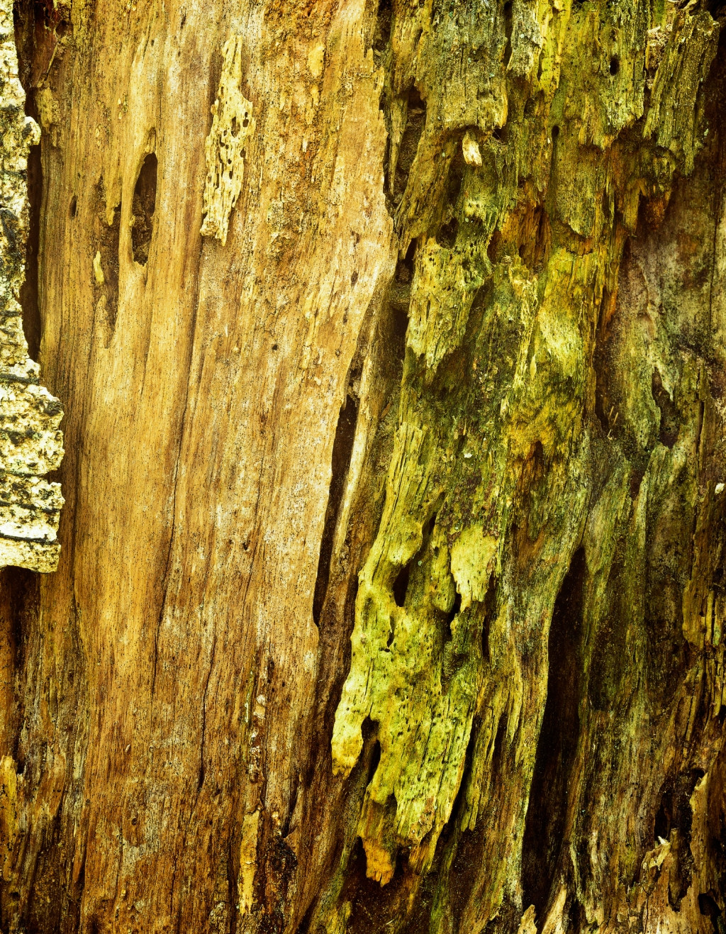 BernwoodBirchBarkDetail5x4Velvia2000