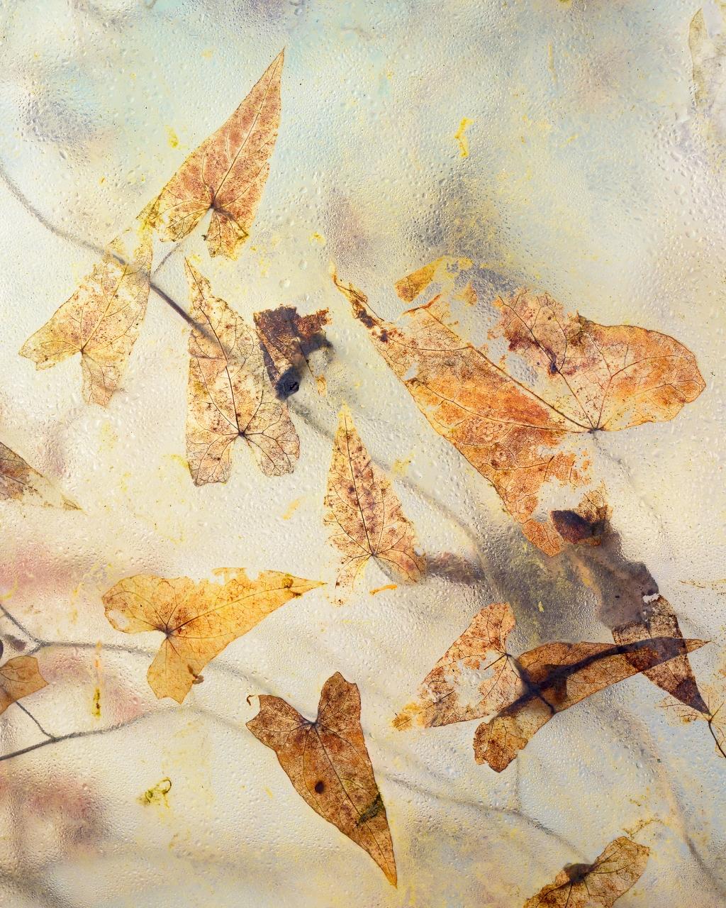Backlit Botanicals Detail
